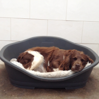 Warm beds